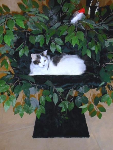 Woodland Dreams Cat Tree